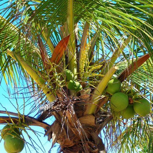 Huile Végétale Coco
